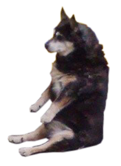 sitting-dog-2.png